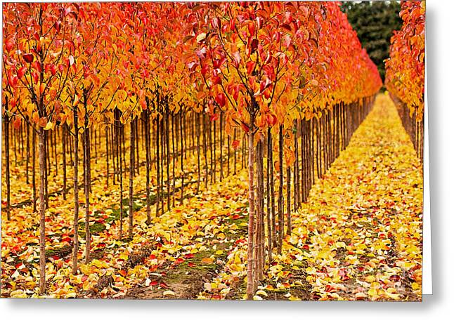Fall Trees Greeting Cards - Treescape 3 Greeting Card by Rebecca Cozart
