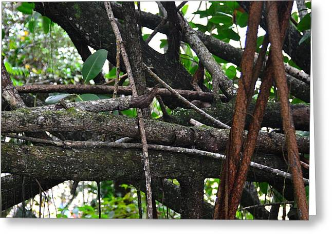 Tree Roots Greeting Cards - Treeworks Greeting Card by Stephanie Guinn