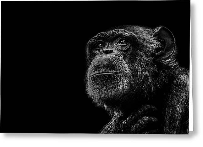 Chimpanzee Greeting Cards - Trepidation Greeting Card by Paul Neville