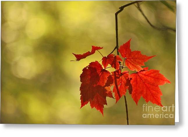 Aimelle Photography Greeting Cards - Tresors dAutomne Greeting Card by Aimelle