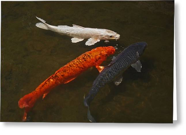 Tri-colored Koi Greeting Card by Rona Black