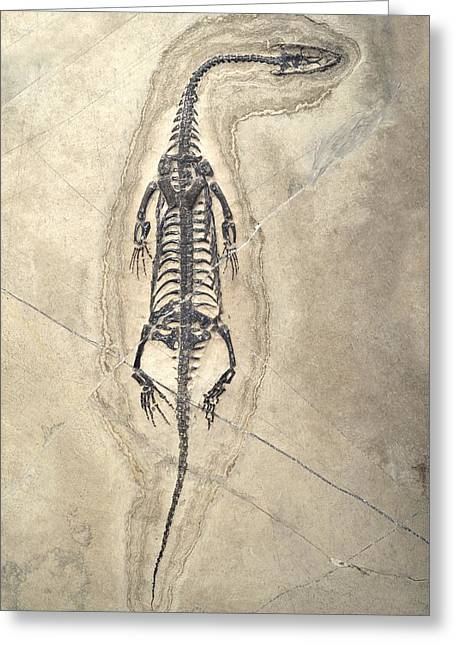 Aquatic Greeting Cards - Triassic Aquatic Reptile Greeting Card by Science Photo Library