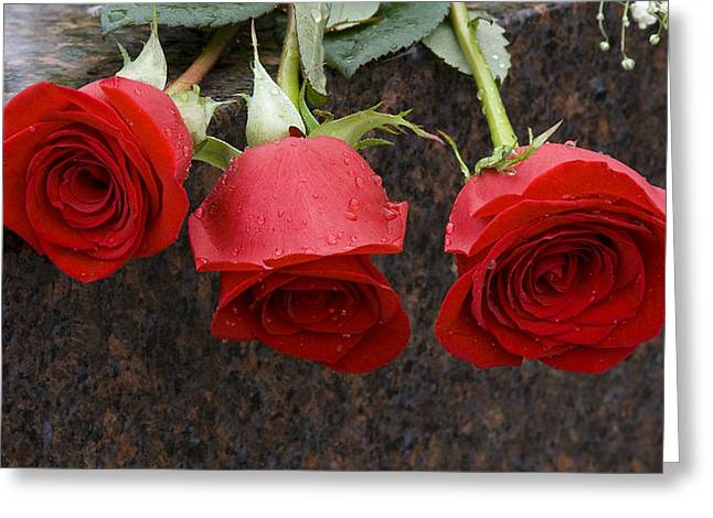 Northern Illinois University Greeting Cards - Tribute Roses Greeting Card by Eric Mace