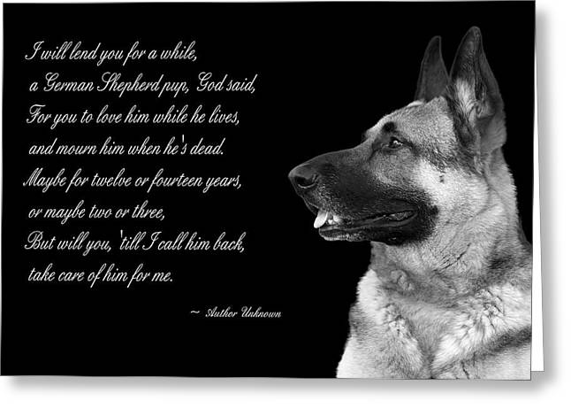 German Shepard Dogs Greeting Cards - Tribute to German Shepard Greeting Card by Cecil Fuselier