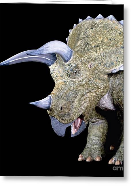 Triceratops Greeting Cards - Triceratops Dinosaur, Museum Model Greeting Card by Natural History Museum, London