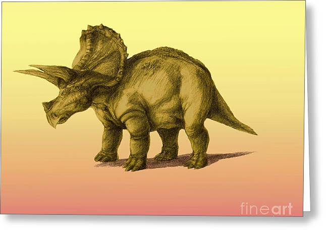 Triceratops Greeting Cards - Triceratops Greeting Card by Spencer Sutton