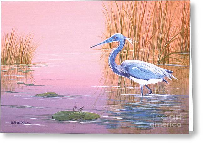 Louisiana Heron Greeting Cards - Tricolored Heron Greeting Card by Bill Holkham