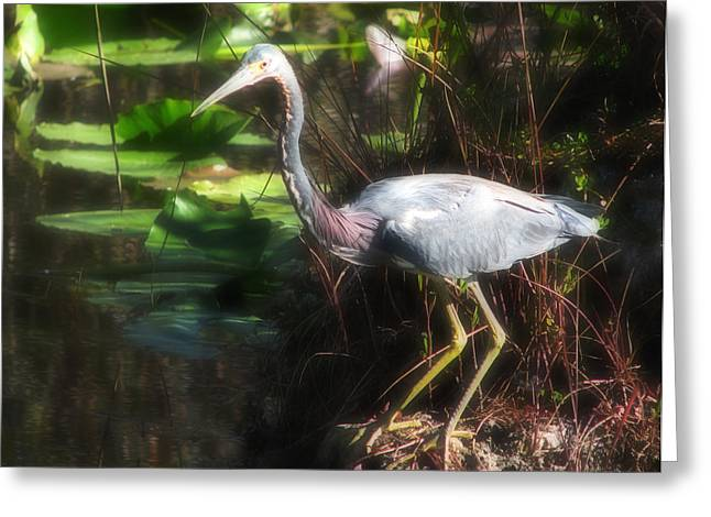 Egretta Tricolor Greeting Cards - Tricolored Heron  Greeting Card by Rudy Umans