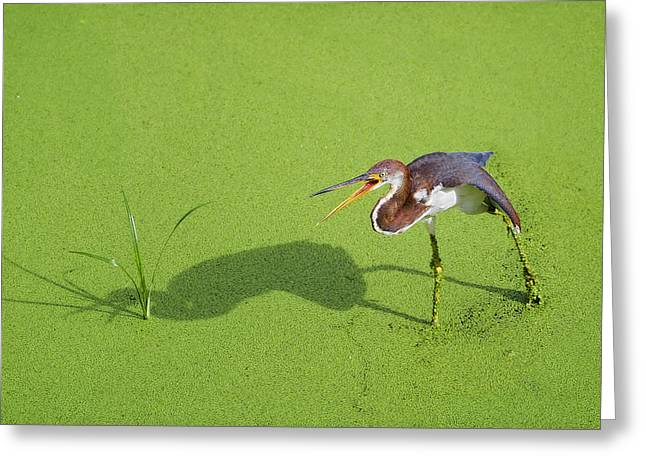 Tri Colored Greeting Cards - TriColored on Green Greeting Card by Patrick M Lynch