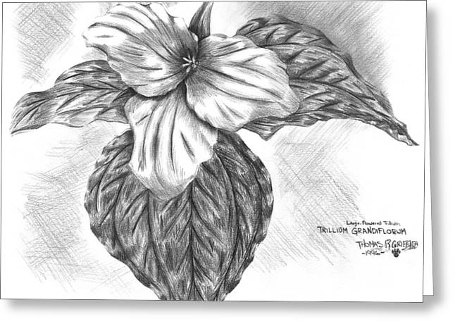 Naturalistic Drawings Greeting Cards - Trillium 1996 Greeting Card by Thomas Griffith