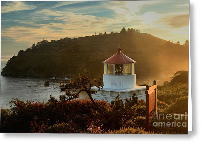 Foggy Beach Greeting Cards - Trinidad Fog Light Greeting Card by Adam Jewell