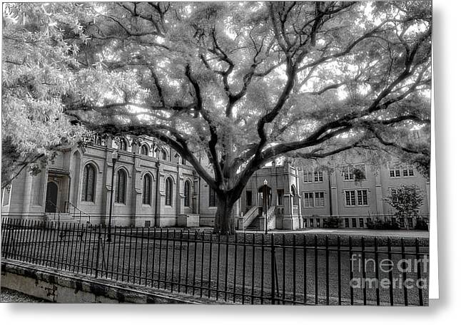 White Church Greeting Cards - Trinity Episcopal Cathedral 2 Greeting Card by Michael Eingle