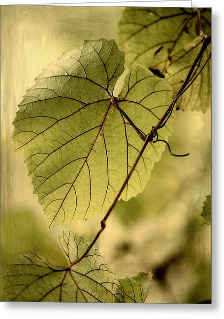 Grape Leaves Digital Greeting Cards - Trinity Grape Leaves Greeting Card by Amy Neal