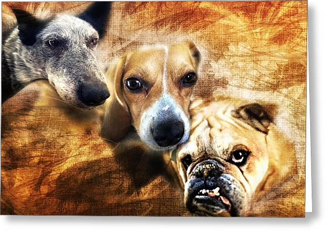 Dog Photographs Greeting Cards - Trio Greeting Card by Camille Lopez