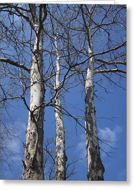 Guy Ricketts Photography Greeting Cards - Trio of Trees Greeting Card by Guy Ricketts