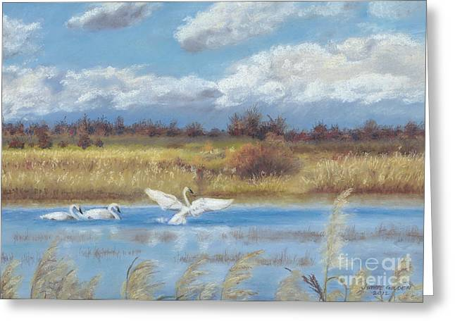 Meadow Pastels Greeting Cards - Trio of Trumpeter Swans  Greeting Card by Jymme Golden