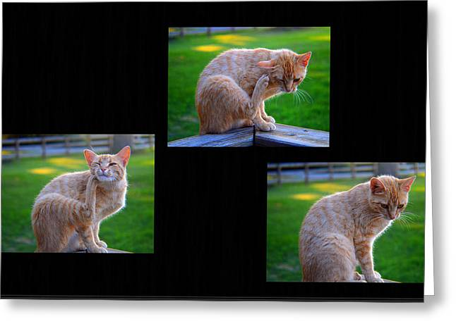 House Pet Greeting Cards - Triple Selfies Greeting Card by Tina M Wenger