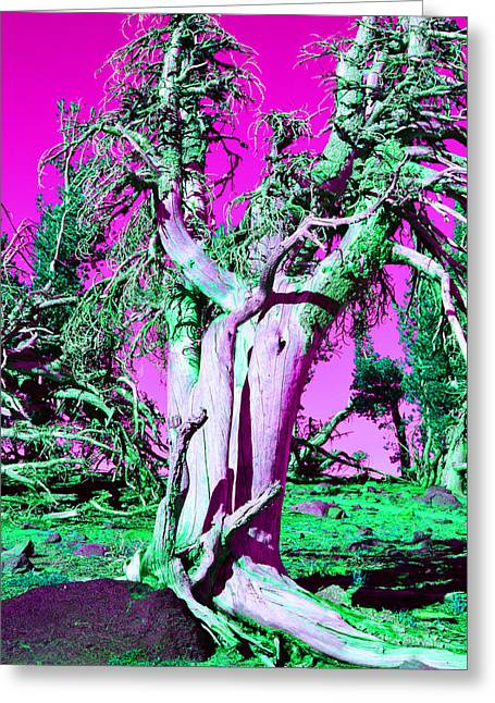 Whitebark Greeting Cards - Trippy Tree Greeting Card by Dustin Brown