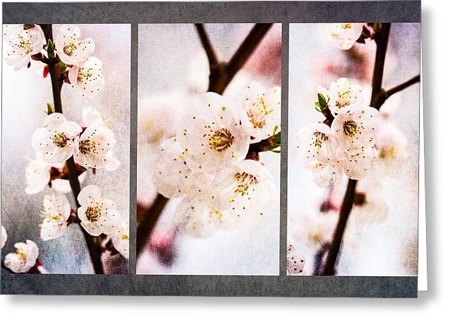 Pink Flower Branch Greeting Cards - Triptych Light Of Spring 1 Greeting Card by Alexander Senin