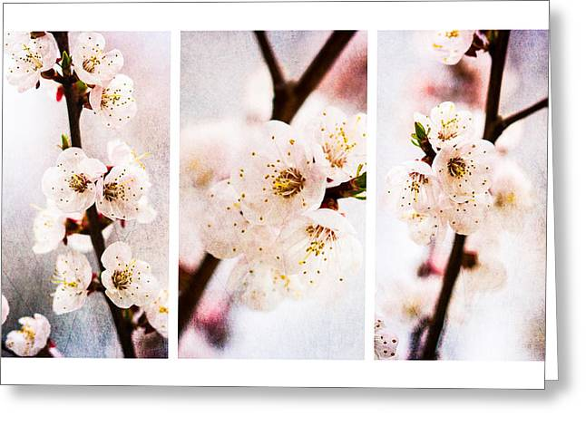 Pink Flower Branch Greeting Cards - Triptych Light Of Spring 2 Greeting Card by Alexander Senin