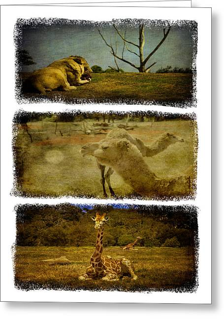Shari Mattox Greeting Cards - Triptych Wildlife Greeting Card by Shari Mattox