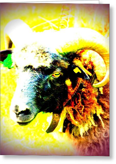 Leading Sheep Greeting Cards - Troll On  Greeting Card by Hilde Widerberg