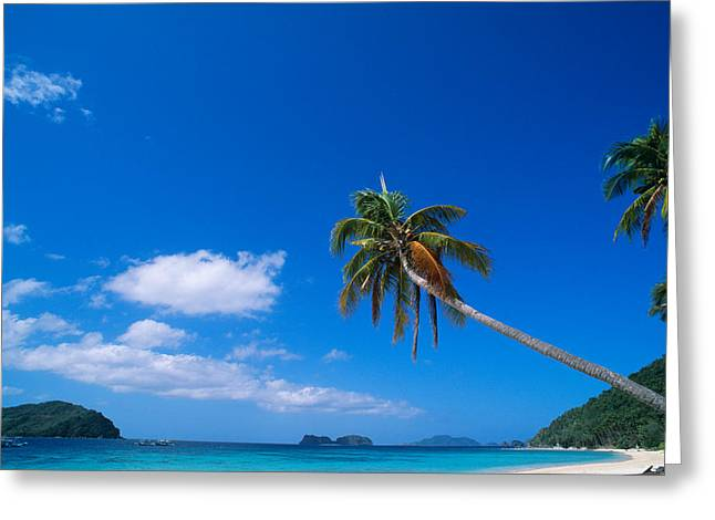 Absence Greeting Cards - Tropical Beach With Coconut Palms Greeting Card by Panoramic Images