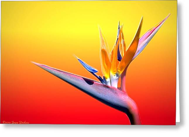 Tropical Beauty Greeting Card by Joyce Dickens