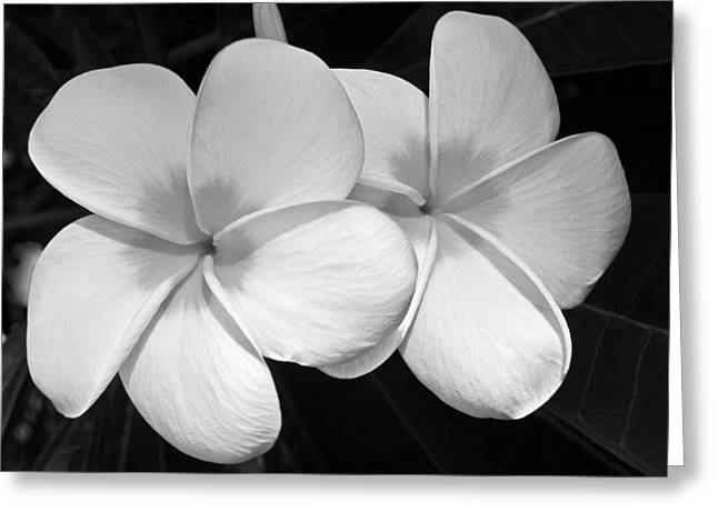 White Flower Greeting Cards - Tropical Beauty Greeting Card by Shane Kelly