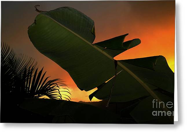 Reception Greeting Cards - Tropical Colors Greeting Card by Cheryl Young
