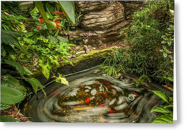 Decorative Fish Greeting Cards - Tropical Koi Pond Swirl Greeting Card by Gene Sherrill