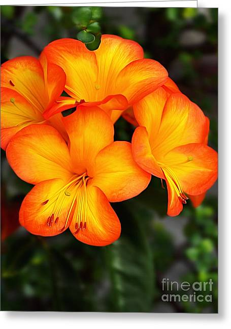 Glowing Floral Greeting Cards - Tropical Delight Greeting Card by Kaye Menner