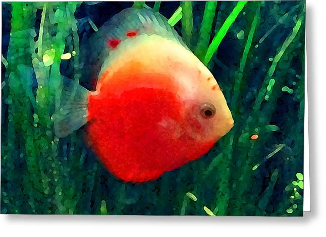 Aquarium Fish Digital Greeting Cards - Tropical Discus Fish Greeting Card by Amy Vangsgard