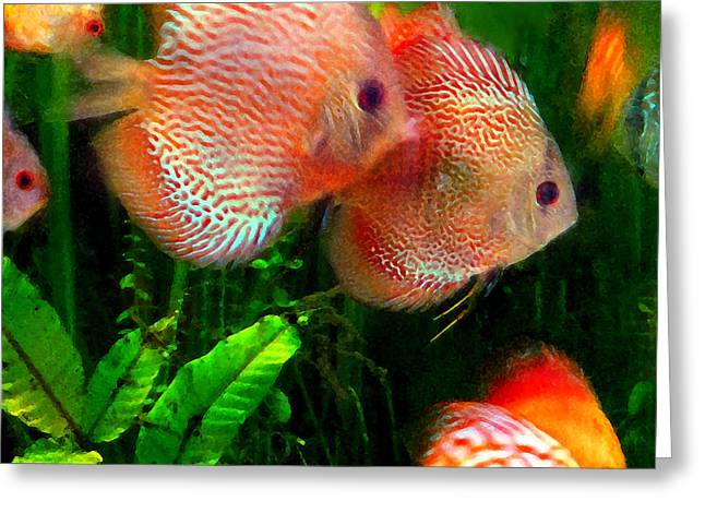 Aquarium Fish Digital Greeting Cards - Tropical Discus Fish Group Greeting Card by Amy Vangsgard
