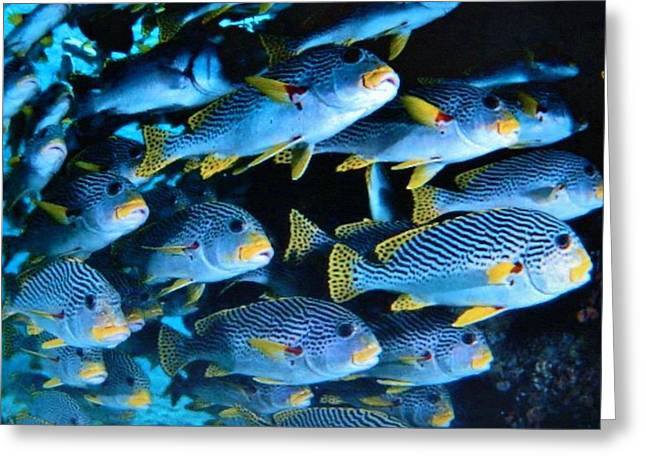 Natur Kunst Bilder Greeting Cards - Tropical Fish  Greeting Card by Gunter  Hortz