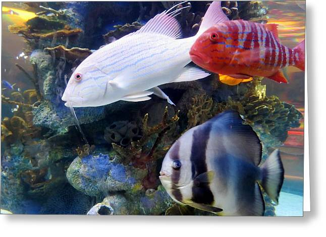 Aquarium Fish Greeting Cards - Tropical Fishes Greeting Card by Zina Stromberg