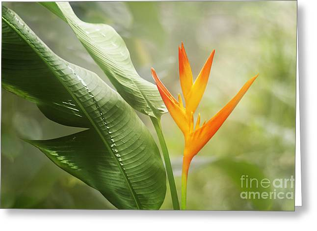 Nature Study Digital Greeting Cards - Tropical Flower Greeting Card by Natalie Kinnear