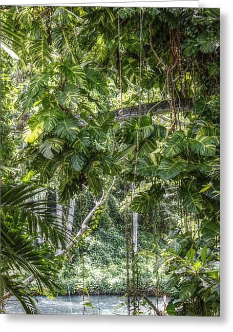 Martha Brae River Greeting Cards - Tropical Foliage Greeting Card by Melanie Lankford Photography