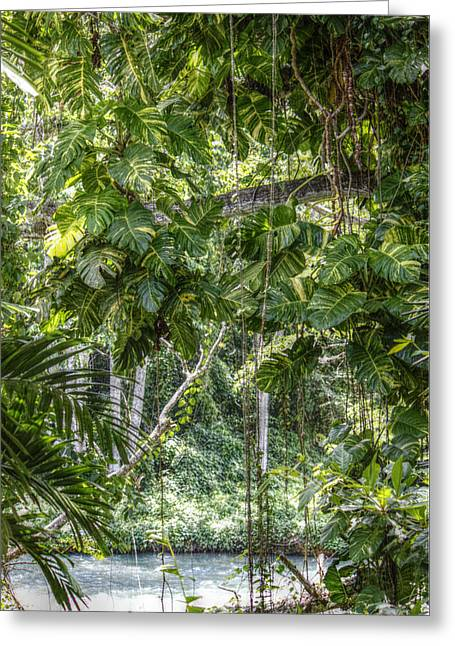 Martha Brae River Greeting Cards - Tropical Foliage Greeting Card by Melanie Lankford Photography