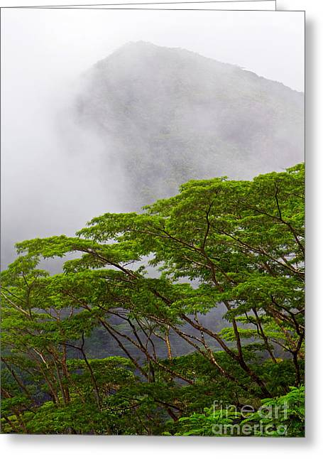 Foggy Ocean Greeting Cards - Tropical Forest, Seychelles Greeting Card by Tim Holt