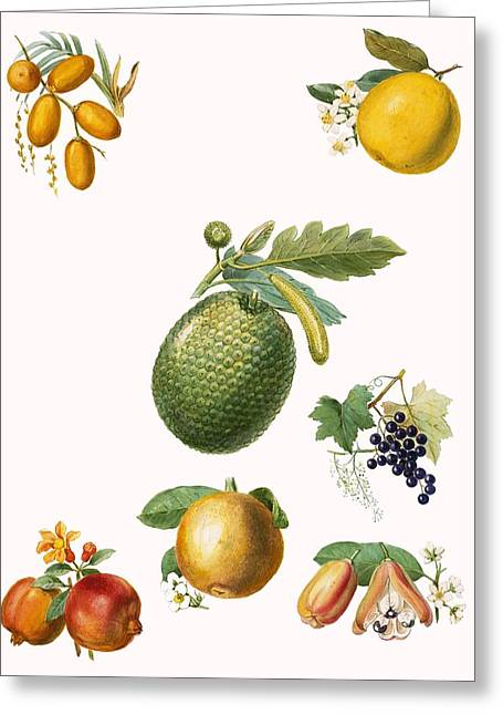 Tropical Fruit Greeting Cards - Tropical Fruit Greeting Card by English School