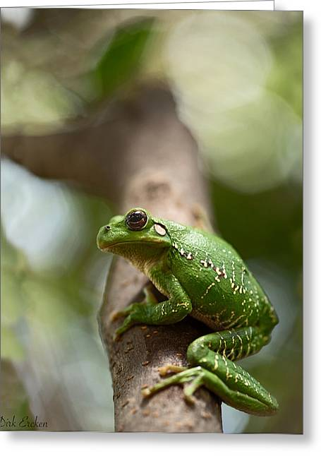 Tree Frog Greeting Cards - Tropical Green Tree Frog Greeting Card by Dirk Ercken