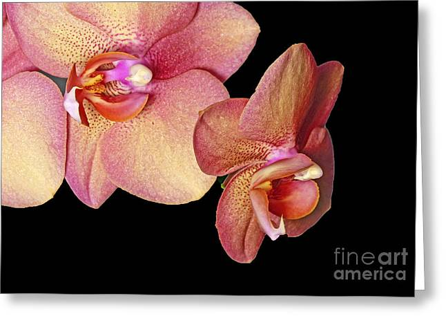 Tropical Illumination Greeting Card by Inspired Nature Photography Fine Art Photography