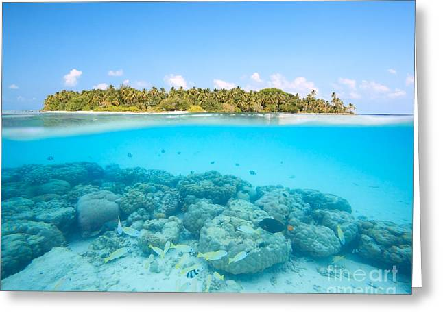 Snorkeling Photos Greeting Cards - Tropical island and underwater coral reef - Maldives Greeting Card by Matteo Colombo