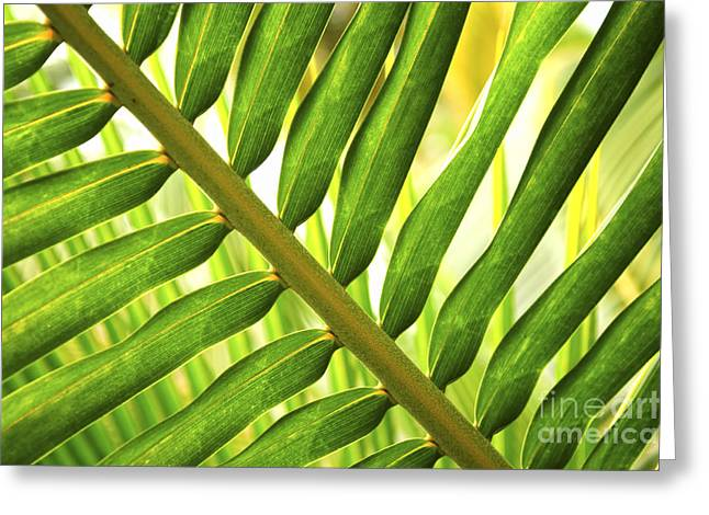 Vitality Greeting Cards - Tropical leaf Greeting Card by Elena Elisseeva
