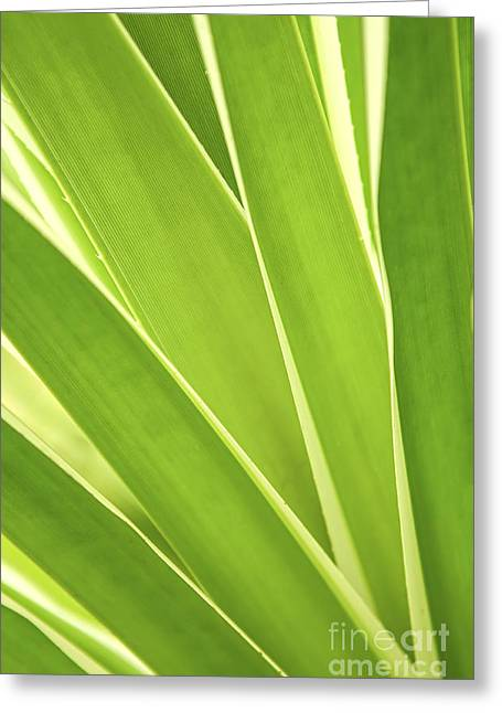Green Leaves Greeting Cards - Tropical leaves Greeting Card by Elena Elisseeva