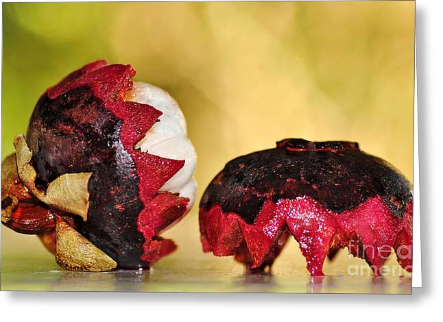 Tangy Photographs Greeting Cards - Tropical Mangosteen Greeting Card by Kaye Menner