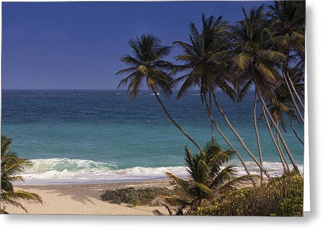 Bottom Greeting Cards - Tropical Paradise Greeting Card by Andrew Soundarajan
