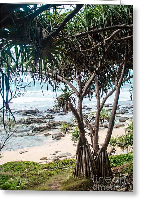 Rocks. Tidal Pool Greeting Cards - Tropical Paradise Greeting Card by Parker Cunningham