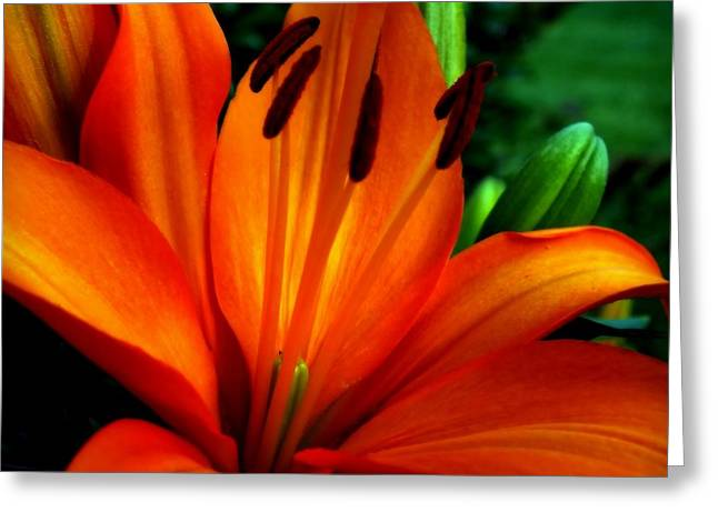Tropical Passion Greeting Card by Karen Wiles